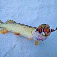Mandula-zanderkiller-fishing-lure-jig-lure-buy-_57 (2)